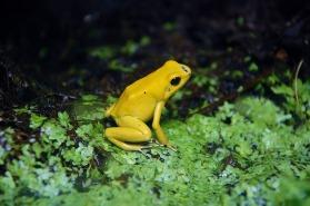 frog-170006_640