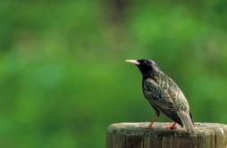 bird-387096_640