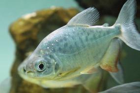fish-2372_640
