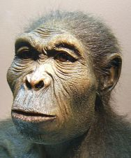 Homo Habilis, c. 2.33 to 1.44 millions years ago