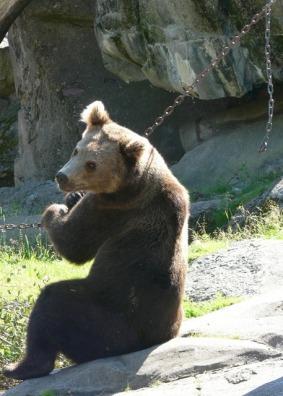 bear-3165_640