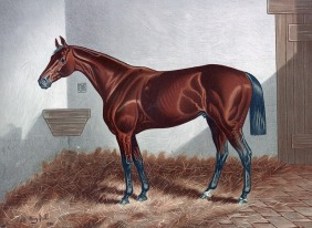 horse-316956_640