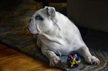 dog-560148_640